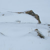 """And it wasn't just prairie habitats either.  We made a couple of passes through Loveland Pass high in the Rockies, where our first visit was in some challenging weather (but the snow <em>did</em> let us out!)...check out how well concealed this <b>White-tailed Ptarmigan</b> was! <div id=""""caption_tourlink"""" align=""""right"""">[photo © participant Pat Newman]</div>"""