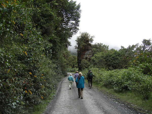 "Shifting back to the South American mainland, we've been very busy over the summer.  Here, guide Rose Ann Rowlett photographed her <b>Mountains of Manu</b> (Peru) group birding along the road through the mountains at 9100 feet elevation. <div id=""caption_tourlink"" align=""right"">Link to: <a id=""caption_tourlink"" href=""http://www.fieldguides.com/manu.htm"" target=""_blank"">MOUNTAINS OF MANU, PERU</a><br>[photo © guide Rose Ann Rowlett]</div>"