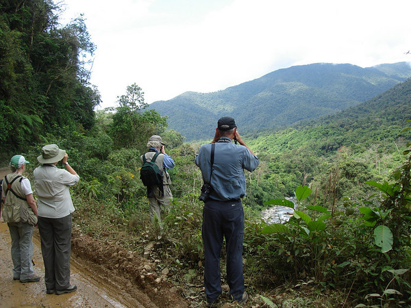 "The mountains provide a fabulous backdrop and often superior vantage point for our birding. <div id=""caption_tourlink"" align=""right"">Link to: <a id=""caption_tourlink"" href=""http://www.fieldguides.com/manu.htm"" target=""_blank"">MOUNTAINS OF MANU, PERU</a><br>[photo © guide Rose Ann Rowlett]</div>"