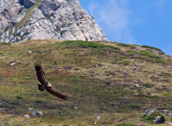 "...while the Pyrenees mountains along the border of France and Spain make some impressive backdrops for raptor watching. <div id=""caption_tourlink"" align=""right"">Link to: <a id=""caption_tourlink"" href=""http://www.fieldguides.com/france.htm"" target=""_blank"">FRANCE: CAMARGUE & PYRENEES</a><br>[photo © guide George Armistead]</div>"