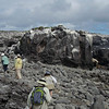 "The volcanic origin of the <b>Galapagos</b> becomes sharply evident once we're ashore -- bring some rugged-soled shoes!<div id=""caption_tourlink"" align=""right"">Link to: <a id=""caption_tourlink"" href=""http://www.fieldguides.com/galapagos.htm"" target=""_blank"">GALAPAGOS</a><br>[photo © guide Alvaro Jaramillo]</div>"