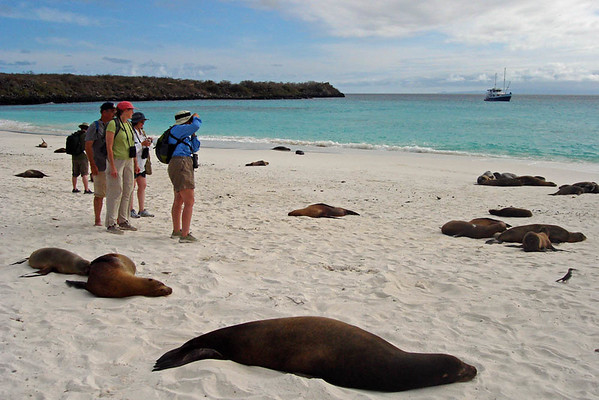 "The islands' beaches are in some spots littered with loafing Galapagos Sea Lions, here at Gardner Bay.<div id=""caption_tourlink"" align=""right"">Link to: <a id=""caption_tourlink"" href=""http://www.fieldguides.com/galapagos.htm"" target=""_blank"">GALAPAGOS</a><br>[photo © guide Alvaro Jaramillo]</div>"