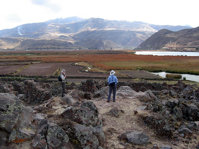 En route down from Cusco, we also stop for birds such as Bearded Mountaineer at the Huacarpay Lake marshes and environs, near the ruins of Urpicancha. Link to: MOUNTAINS OF MANU, PERU[photo © guide Rose Ann Rowlett]