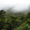 """The lush Alakai Forest in the highlands of Kauai is a critical destination for several avian specialties, among them Puaiohi, Akikiki, and Akeke'e. <div id=""""caption_tourlink"""" align=""""right""""> [Photo © guide Rose Ann Rowlett]</div>"""