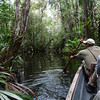 """Another highlight of a visit to <b>Sacha</b> is canoeing along several narrow waterways inside flooded forest.  Here local guide and bird expert Oscar Tapuy guides the bow along the Orquidea Trail. <div id=""""caption_tourlink"""" align=""""right"""">[photo © Rose Ann Rowlett]</div>"""