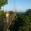 """In addition to the ceiba tree canopy platform, <b>Sacha</b> has a fantastic three-towered canopy walkway giving access to a different patch of forest.  Both treetop venues offer fabulous birding and different species to look for. <div id=""""caption_tourlink"""" align=""""right"""">[photo © Rose Ann Rowlett]</div>"""