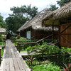 """<b>Sacha</b> is a fun and comfortable base for some great rainforest, river edge, and parrot lick birding.  Here are a few of the duplex cabins off the swimmable lagoon. <div id=""""caption_tourlink"""" align=""""right"""">[photo © Rose Ann Rowlett]</div>"""