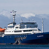Our ship, the 293-foot Plancius, proved itself a comfortable and seaworthy vessel. Moored just off the Falklands here, it held 106 passengers and 44 crew. We'll be using it again this summer (2011) for our Spitsbergen & Svalbard cruise to Arctic Norway, and for our 2012 Antarctica cruise. (Photo by guide George Armistead)