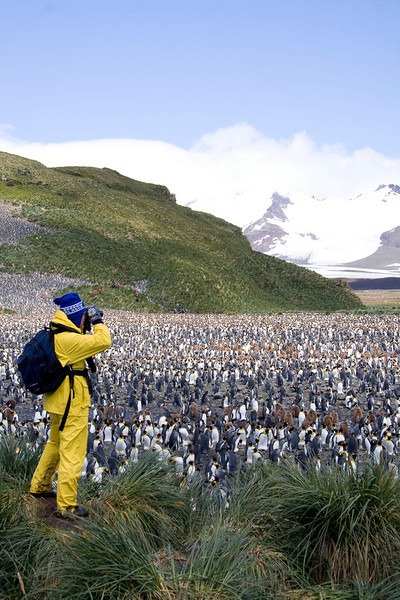 Tim, one of the participants on our cruise, scans the plains on South Georgia, soaking up the sheer totality of the biomass present. It was a feast for the eyes, ears, and nose! Sensory overload! (Photo by guide George Armistead)