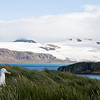 This Wandering Albatross had a nice view from Prion Island off South Georgia. (Photo by guide George Armistead)