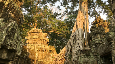 "Ta Prohm in the Angkor complex is known as the ""Tree Temple"" -- nature has added its artistry to this elaborately carved masterpiece. Photo by guide Doug Gochfeld."