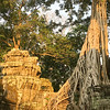 """Ta Prohm in the Angkor complex is known as the """"Tree Temple"""" -- nature has added its artistry to this elaborately carved masterpiece. Photo by guide Doug Gochfeld."""