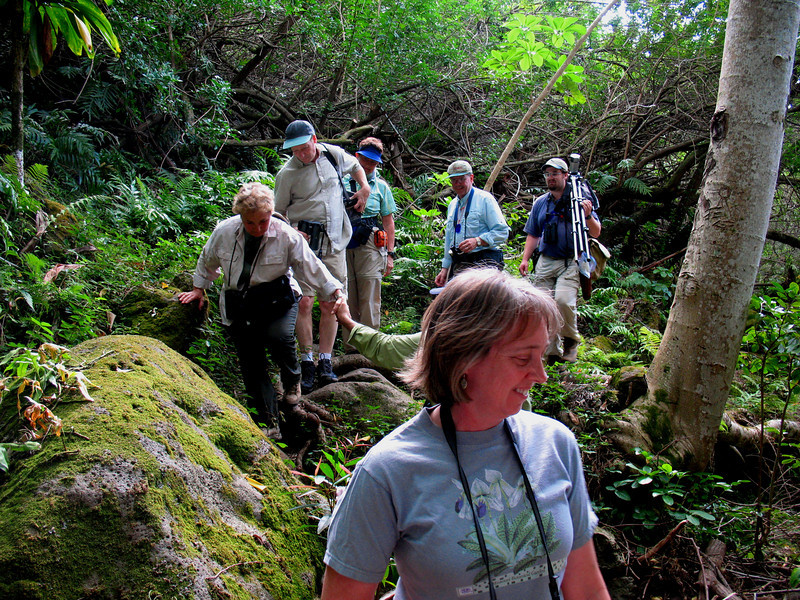 "And the group hits the trail at Kuliouou Valley on Oahu.<div id=""caption_tourlink"" align=""right"">Link to: <a id=""caption_tourlink"" href=""http://www.fieldguides.com/hawaii.htm"" target=""_blank"">HAWAII</a><br>[photo © Linda J. Nuttall]</div>"