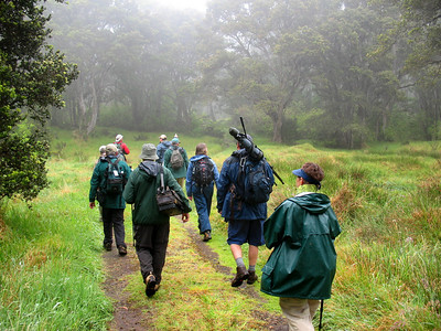 We bird high and low on these islands, which have a good system of reserves.  Here our 2008 group explores Hakalau Forest NW on the island of Hawaii.Link to: HAWAII[photo © Linda J. Nuttall]