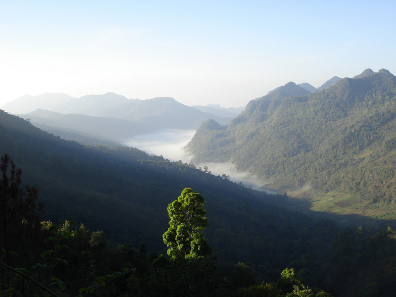 """We continue this month's selection with images from our Thailand itinerary.  Guide Rose Ann Rowlett recently posted photographs from our 2008 tour as well as some from previous trips.  Here we see early morning fog over the valley at Doi Ang Khang, an important birding destination located on the Thailand-Myanmar border about 150 kilometers northwest of Chiang Mai.  Possibilities at Doi Ang Khang include everything from Mountain Bamboo-Partridge and Crimson-breasted Woodpecker to Crested Finchbill, Green Cochoa, Russet Bush-Warbler, White-browed Laughingthrush, Eye-browed Wren-Babbler, and Gray-headed and Spot-breasted parrotbills.<div id=""""caption_tourlink"""" align=""""right"""">Link to: <a id=""""caption_tourlink"""" href=""""http://www.fieldguides.com/thailand.htm"""" target=""""_blank"""">THAILAND</a><br>[photo © Rose Ann Rowlett]</div>"""