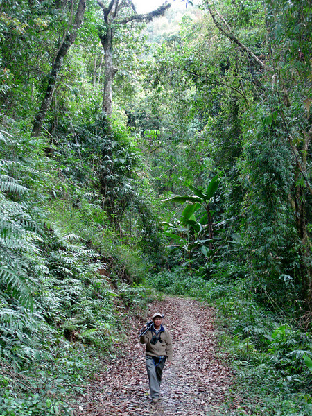 """Co-leader Uthai Treesucon is a key contributor to our Thailand and Vietnam tours: Here he's on the trail through Magic Valley in Doi Ang Khang.<div id=""""caption_tourlink"""" align=""""right"""">Link to: <a id=""""caption_tourlink"""" href=""""http://www.fieldguides.com/thailand.htm"""" target=""""_blank"""">THAILAND</a><br>[photo © Rose Ann Rowlett]</div>"""