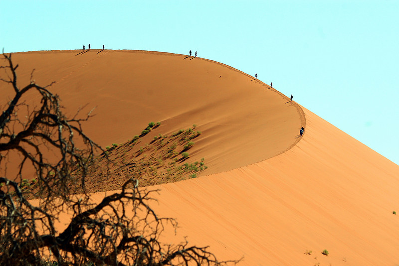 "Paul Thomas' image of birding a dune crest gives dramatic testimony to the sheer scale of these sand formations.<div id=""caption_tourlink"" align=""right"">Link to: <a id=""caption_tourlink"" href=""http://www.fieldguides.com/namibia.htm"" target=""_blank"">NAMIBIA & BOTSWANA</a><br>[photo © participant Paul Thomas]</div>"