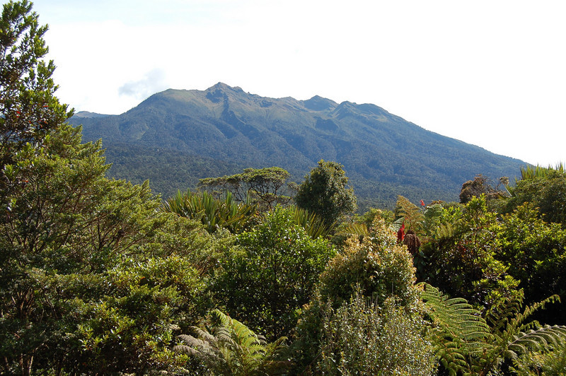 "The lush mountainous landscapes of New Guinea in the Mount Hagen area.<div id=""caption_tourlink"" align=""right"">Link to: <a id=""caption_tourlink"" href=""http://www.fieldguides.com/naz.htm"" target=""_blank"">NEW GUINEA & AUSTRALIA</a><br>[photo © Jack Brown]</div>"