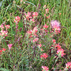 """April is primetime for the roadside flower display in Texas, an added bonus for our Texas tours.  Texas Coast Migration Spectacle participant Peter Heilbroner sent in this image.<div id=""""caption_tourlink"""" align=""""right"""">Link to: <a id=""""caption_tourlink"""" href=""""http://www.fieldguides.com/mig.htm"""" target=""""_blank"""">TEXAS COAST MIGRATION SPECTACLE</a><br>[photo © Peter Heilbroner]</div>"""