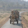 """And while we're on the transportation theme: Camels drawing carts [Photo by participant Ken Havard]<div id=""""caption_tourlink"""" align=""""right"""">Link to: <a id=""""caption_tourlink"""" href=""""http://www.fieldguides.com/india.htm"""" target=""""_blank"""">NORTHERN INDIA</a><br>[photo © Ken Havard]</div>"""