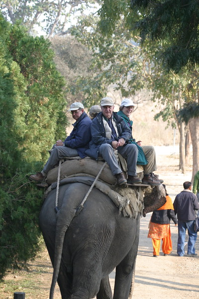 """An elephant ride for Tiger (and the experience, of course!) is almost mandatory at Corbett National Park on our Northern India tour, photographed by participant Ken Havard.<div id=""""caption_tourlink"""" align=""""right"""">Link to: <a id=""""caption_tourlink"""" href=""""http://www.fieldguides.com/india.htm"""" target=""""_blank"""">NORTHERN INDIA</a><br>[photo © Ken Havard]</div>"""