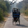 """Bicycle-rickshaws take birders out to the best spots at the famous Bharatpur reserve. [Photo by participant Ken Havard]<div id=""""caption_tourlink"""" align=""""right"""">Link to: <a id=""""caption_tourlink"""" href=""""http://www.fieldguides.com/india.htm"""" target=""""_blank"""">NORTHERN INDIA</a><br>[photo © Ken Havard]</div>"""