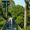 "Sepilok Canopy Walkway <div id=""caption_tourlink"" align=""right""> [Photo © participants David & Judy Smith]</div>"