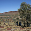 """Spinifex is a characteristically Australian open habitat...<div id=""""caption_tourlink"""" align=""""right"""">Link to: <a id=""""caption_tourlink"""" href=""""http://www.fieldguides.com/australia.htm"""" target=""""_blank"""">AUSTRALIA</a><br>[photo © guide Dave Stejskal]</div>"""