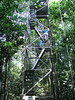 """Ascending the canopy tower <div id=""""caption_tourlink"""" align=""""right""""> [photo © guide Mitch Lysinger]</div>"""