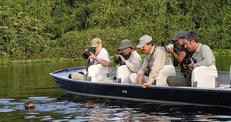 """A boat outing in the northern Pantanal gets close to a Giant Otter.<div id=""""caption_tourlink"""" align=""""right""""><br>[photo © Bret Whitney]</div>"""