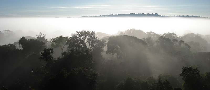 "Early-morning view from the canopy platform at the Cristalino Jungle Lodge<div id=""caption_tourlink"" align=""right""><br>[photo © Bret Whitney]</div>"