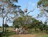 "Birding near Porto Alegre<div id=""caption_tourlink"" align=""right""><br>[photo © Bret Whitney]</div>"