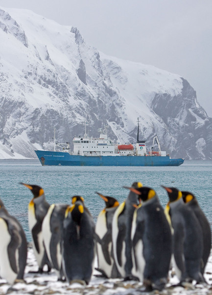 "Our ship, the Professor Multanovskiy, at Fortuna Bay, South Georgia. <div id=""caption_tourlink"" align=""right""> [Photo © George Armistead]</div>"
