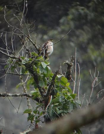 Bolivia's Avian Riches 2011