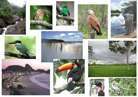 "Well, we could go on a lot longer, but it's time to wrap it up here for now. We hope you enjoyed this brief virtual tour along Field Guides Itatiaia, Iguazu Falls & Pantanal itinerary. If you could imagine yourself in the scenes above, don't hesitate to contact our office for more information. There are more great tours to come. We look forward to seeing you in Brazil!  — Jan Pierson<div id=""caption_tourlink"" align=""right""> [photos © guide Jan Pierson]</div>"