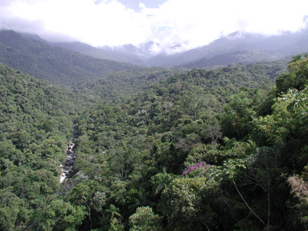 """Itatiaia National Park is our first destination of the tour. About 150 kms west of Rio's airport, the park, Brazil's oldest, features mountains lushly draped with Atlantic Forest, a highly threatened and fragmented habitat that is just loaded with regional specialties. Best of all, it's a relatively cool, comfortable, and birdy spot to begin our trip!<div id=""""caption_tourlink"""" align=""""right""""> [photo © guide Jan Pierson]</div>"""