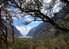 """The Quebrada Llanganuco contains glacial lakes and our first big stands of Polylepis, which belongs to the rose family and grows (slowly!) at higher elevation than any other tree. <div id=""""caption_tourlink"""" align=""""right"""">[photo © guide Richard Webster]</div>"""
