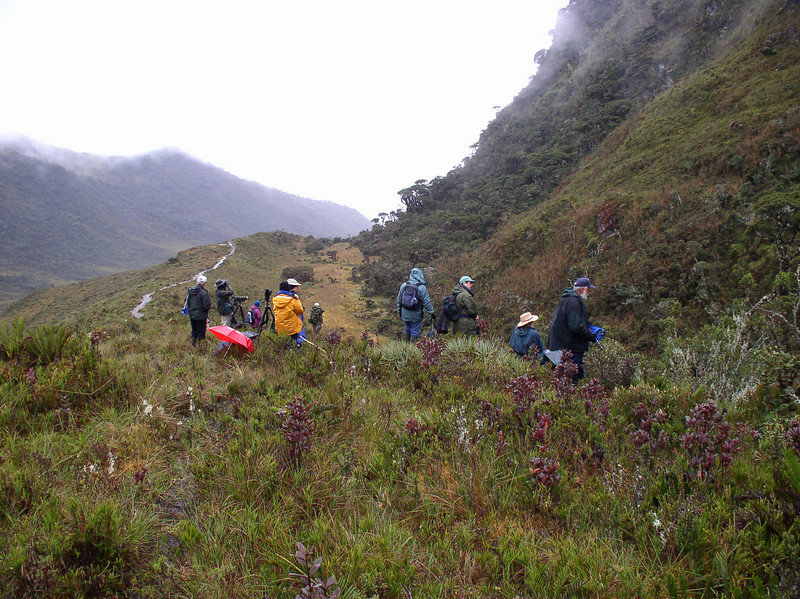 """A trail winds from our campsite down the humid east slope through what is known in Peru as pajonal, the high-elevation mosaic of moist paramo (or jalca) and treeline forest.  We hike here daily in search of our target species. <div id=""""caption_tourlink"""" align=""""right"""">[photo © guide Rose Ann Rowlett]</div>"""