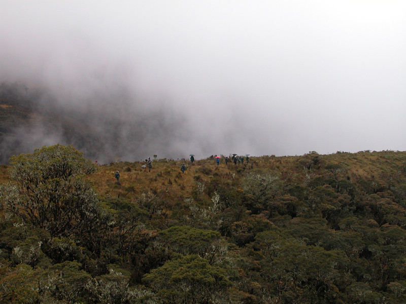 """Moisture from Amazonia condenses as it rises up the east-Andean slope, sometimes resulting in dark skies and rain. <div id=""""caption_tourlink"""" align=""""right"""">[photo © guide Richard Webster]</div>"""