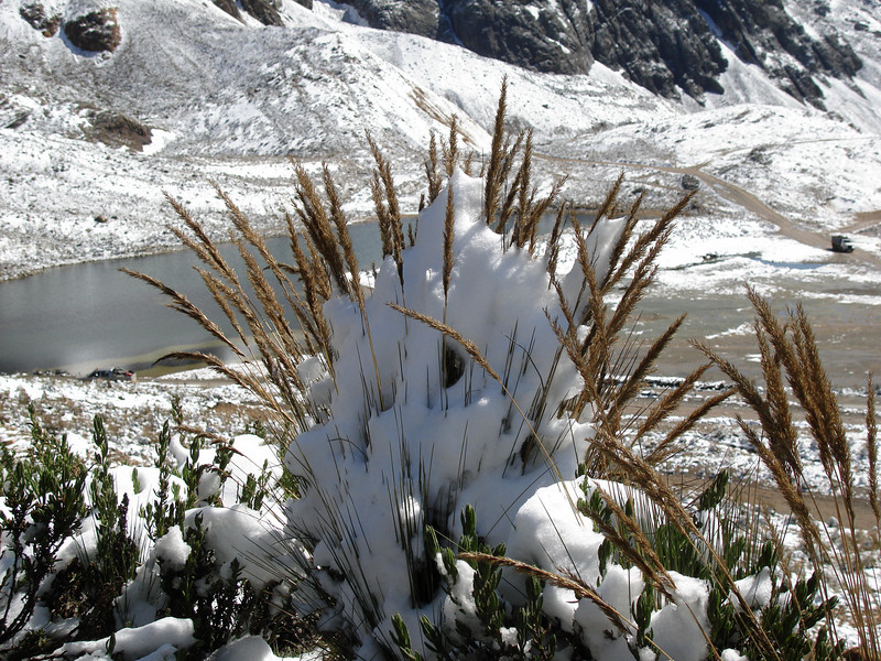 """Fresh snow can coat everything at Ticlio Pass, right on the continental divide. Under such conditions...<div id=""""caption_tourlink"""" align=""""right"""">[photo © guide Rose Ann Rowlett]</div>"""