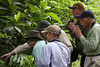 """Participant Tom Evans helps other group members to spot an understory bird.   La Vega, Colombia, Jan 2010. <br><div id=""""caption_tourlink"""" align=""""right""""> [photo © guide Jesse Fagan]</div>"""