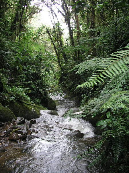 Forest stream near San Isidro Lodge. Photo by guide Mitch Lysinger.