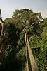 "Canopy walkway, Explornapo <div id=""caption_tourlink"" align=""right""> [photo © guide guide Richard Webster]</div>"
