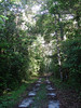 """Trail through the white sand forest of the Allpahuayo-Mishana Reserve <div id=""""caption_tourlink"""" align=""""right""""> [photo © guide Rose Ann Rowlett]</div>"""