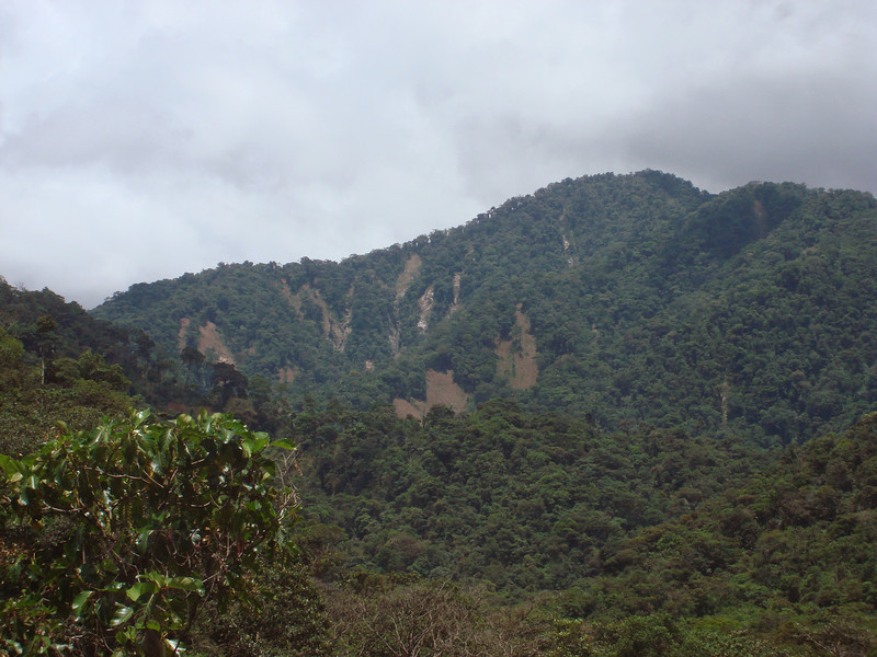 The rainy season of 2009-2010 was a heavy one, and resulted in many landslides on the lower slopes of Manu, which resulted in a whole new face to the road!  (Photo by guide Dan Lane)