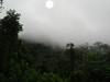 """The outlying ridge of the Andes right behind Amazonia Lodge reaches into the clouds some mornings and holds the mist, as well as a number of foothill birds.<div id=""""caption_tourlink"""" align=""""right""""><br>[photo © Rose Ann Rowlett]</div>"""