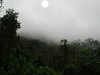 """The outlying ridge of the Andes right behind Amazonia Lodge reaches into the clouds some mornings and holds the mist, as well as a number of foothill birds. <div id=""""caption_tourlink"""" align=""""right""""><br>[photo © guide Rose Ann Rowlett]</div>"""