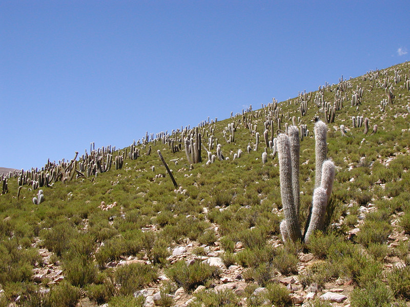 "Northwest Argentina scrub <div id=""caption_tourlink"" align=""right""> [photo © guide Dave Stejskal]</div>"