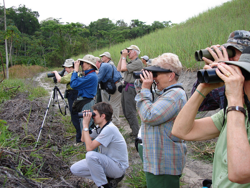 "Group admiring a handsome Pinto's spinetail, wondering how anyone could have suggested calling it ""Plain"" Spinetail! <div id=""caption_tourlink"" align=""right""> [photo © guide Bret Whitney]</div>"