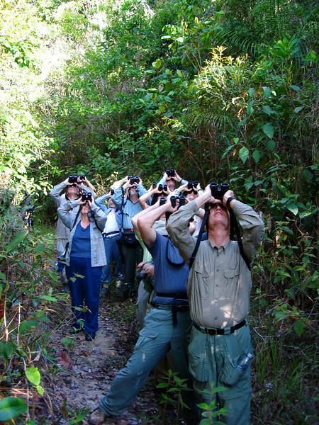 """Group spotting Bahia Antwren <div id=""""caption_tourlink"""" align=""""right""""> [photo © guide Bret Whitney]</div>"""